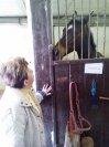 Senioři u koní v SŠDSaJ