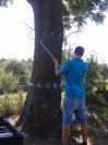Posouzení zdravotního stavu dřeviny 3