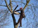 údržba stromů
