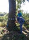 Posouzení zdravotního stavu dřeviny 2